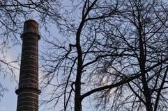 Tubo industrial detrás de ramas de árboles Fotos de archivo libres de regalías