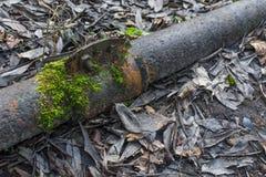 Tubo oxidado del metal en el primer del bosque Foto de archivo