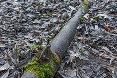 Tubo oxidado del metal en el primer del bosque Fotografía de archivo libre de regalías