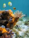 Tubo-vite senza fine e mare-spugne arancioni Fotografie Stock Libere da Diritti