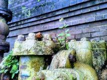 Tubos con la hierba verde imagenes de archivo