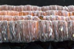 Tubos da rotação doce da massa em um fogo aberto foto de stock royalty free