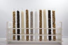 Tubos de ensaio com sementes de cereal Fotos de Stock Royalty Free