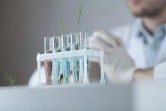 Tubos de ensaio com substâncias e as plantas diferentes Imagens de Stock