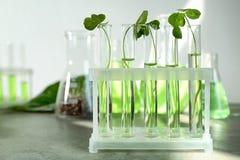 Tubos de ensayo con las plantas en tenedor Fotografía de archivo libre de regalías