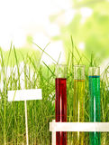 Tubos de ensayo con los líquidos coloreados en hierba en verde abstracto Fotos de archivo