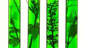 Tubos de ensayo con los líquidos y la vid verdes almacen de video
