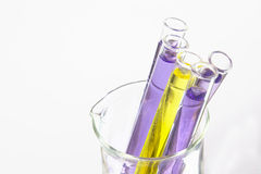 Tubos de ensayo violetas en cubilete Fotografía de archivo