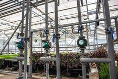 Tubos del sistema automático de la irrigación o de riego en invernadero hidropónico moderno, plantas cultivadoras y crecientes in foto de archivo libre de regalías