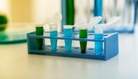 Tubos micro con las muestras biológicas en laboratorio Foto de archivo libre de regalías
