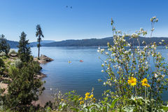 Tubs Hill, Coeur d' Alene Idaho Royalty Free Stock Images