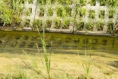 Tubulação da água de esgoto Imagem de Stock Royalty Free