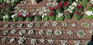 Tubulações do sistema de irrigação do gotejamento na terra imagem de stock royalty free
