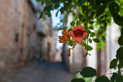 Tubular Flower. Street view form Ayvalik (Turkey) with Tubular flowers Royalty Free Stock Photography