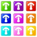Tubular mushroom icons 9 set. Tubular mushroom icons of 9 color set isolated vector illustration Stock Photography