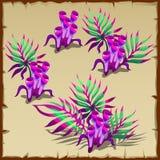 Tubular purple and green marine seaweed. Four vector image Stock Photos