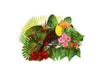 Tucán en Forest Foliage Flowers Grunge Illustration tropical Fotografía de archivo