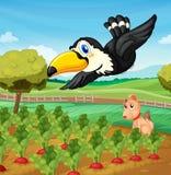 Tucán sobre granja Imagen de archivo libre de regalías