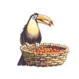 Tucan Foto de archivo libre de regalías