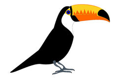 Tucan stock illustration