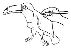 Tucan drawing. Creative design of toucan drawing Stock Photography