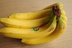 TUCAN EKWADOR banana owoc Obrazy Royalty Free