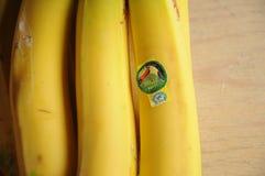 TUCAN EKWADOR banana owoc Obraz Royalty Free