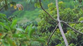 Tucan flugor i väg från en trädfilial stock video