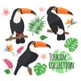 Tucani con gli elementi tropicali isolati su bianco illustrazione di stock
