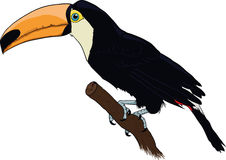Tucano ilustração do vetor