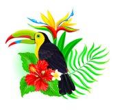 Tucano con foglia di palma ed ibisco Immagine Stock Libera da Diritti