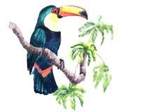 Tucano dell'acquerello Immagini Stock Libere da Diritti