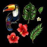 Tucano e elementos tropicais do bordado das flores e das folhas Imagem de Stock