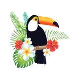 Tucano em um fundo branco com folhas e as flores exóticas Fotografia de Stock Royalty Free