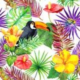 Tucano, geco, folhas tropicais, flores exóticas Teste padrão sem emenda da selva watercolor fotografia de stock royalty free