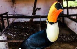 Tucano-Vogel, der misstrauisch schaut Lizenzfreie Stockbilder