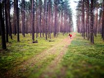 Tuchola Pinewoods. Artistic look in vintage vivid colours. Royalty Free Stock Images