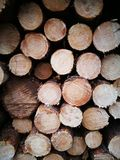 Tuchola Pinewoods. Artistic look in vintage vivid colours. Stock Images