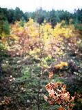 Tuchola Pinewoods. Artistic look in vintage vivid colours. Stock Photos