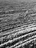 Tuchola Pinewoods Artystyczny spojrzenie w czarny i biały Obraz Stock