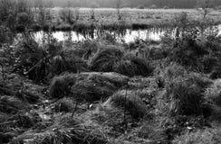Tuchola tallskogar Konstnärlig blick i svartvitt Arkivbilder