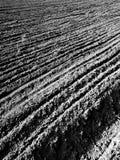 Tuchola tallskogar Konstnärlig blick i svartvitt Arkivbild