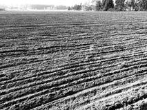 Tuchola tallskogar Konstnärlig blick i svartvitt Arkivfoto