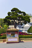 Tuck Shop, Lotte World, Corea del Sud Immagini Stock Libere da Diritti