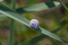 Tucked away in a snail shell on the green leaf Stock Photos