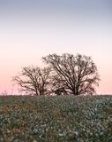 Tucked between the flower fields, the trees see the sunset come out.  royalty free stock image