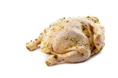 Tucked in grude hen Royalty Free Stock Photo