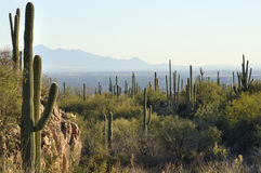 Tucson, Arizona Royalty Free Stock Images