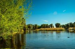 Tucson, Arizona Oasis Park. Historical Agua Caliente Oasis Park stock photos