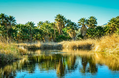Tucson, Arizona Oasis Park. Historical Agua Caliente Oasis Park stock photography